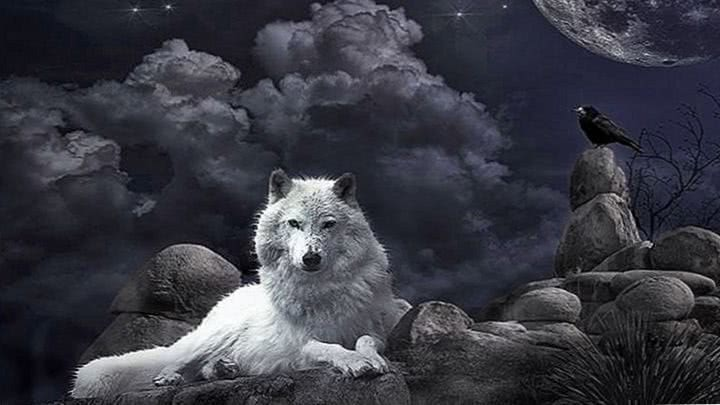 Some Wolf Wallpaper