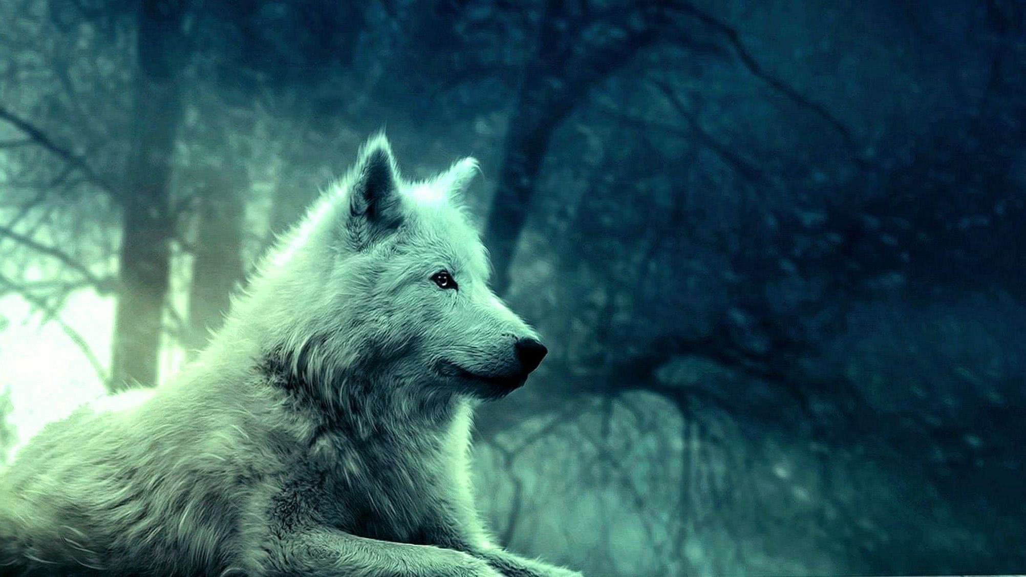 Wolves Wallpapers 2048x1152