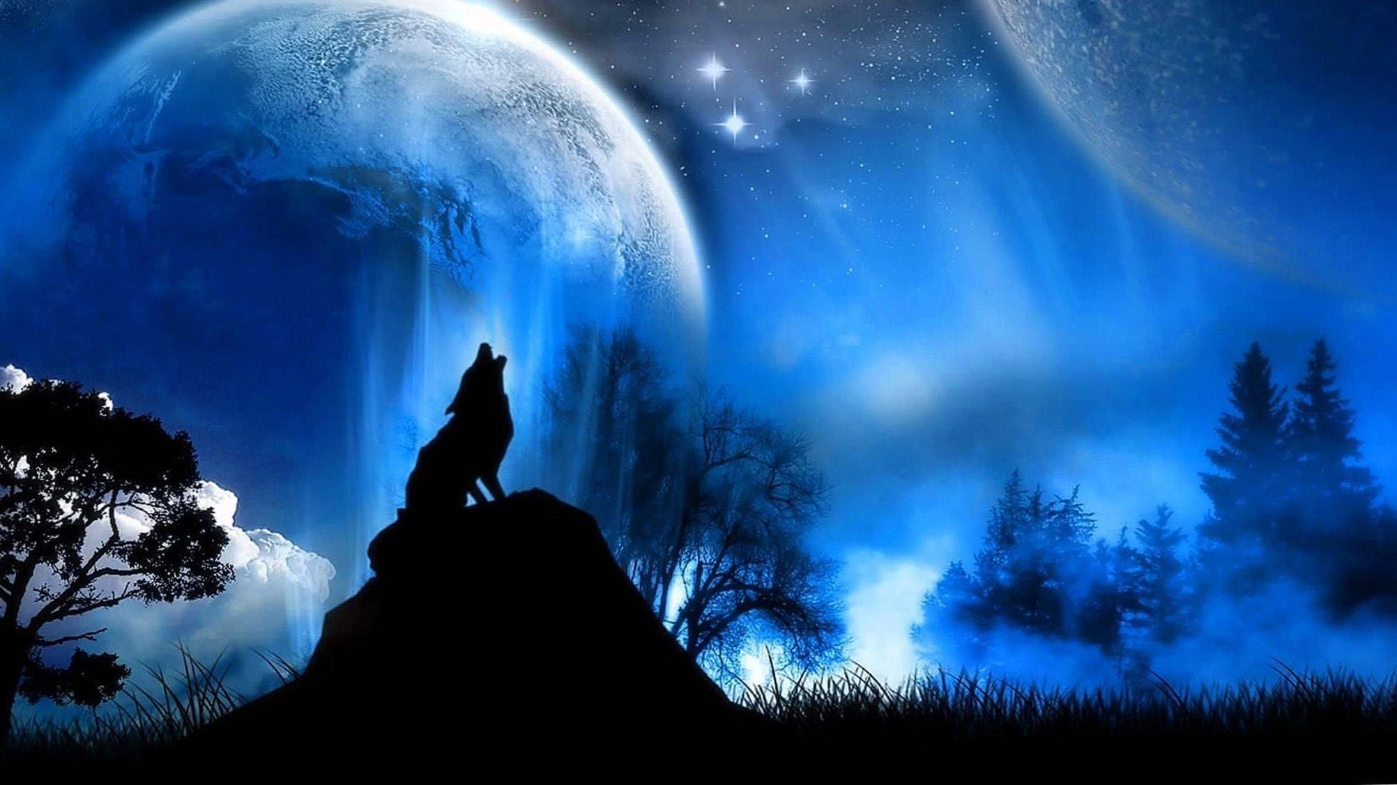 2048×1152 Wallpaper Wolves
