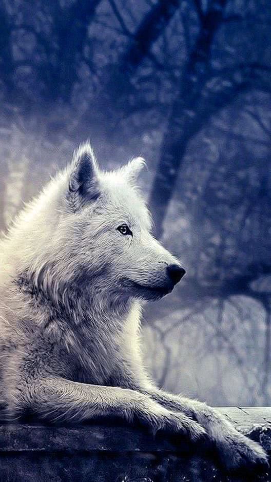 Wallpapers Wolf Game