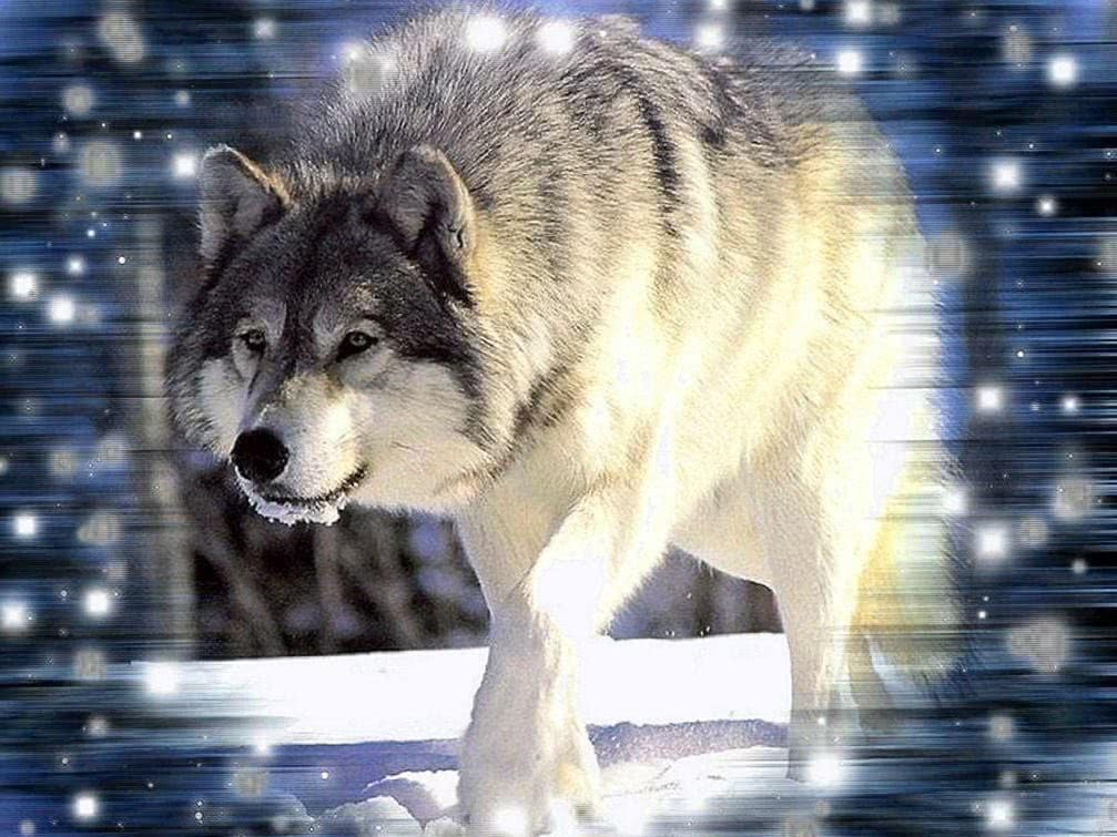 Wallpapers Of Wolf Wild