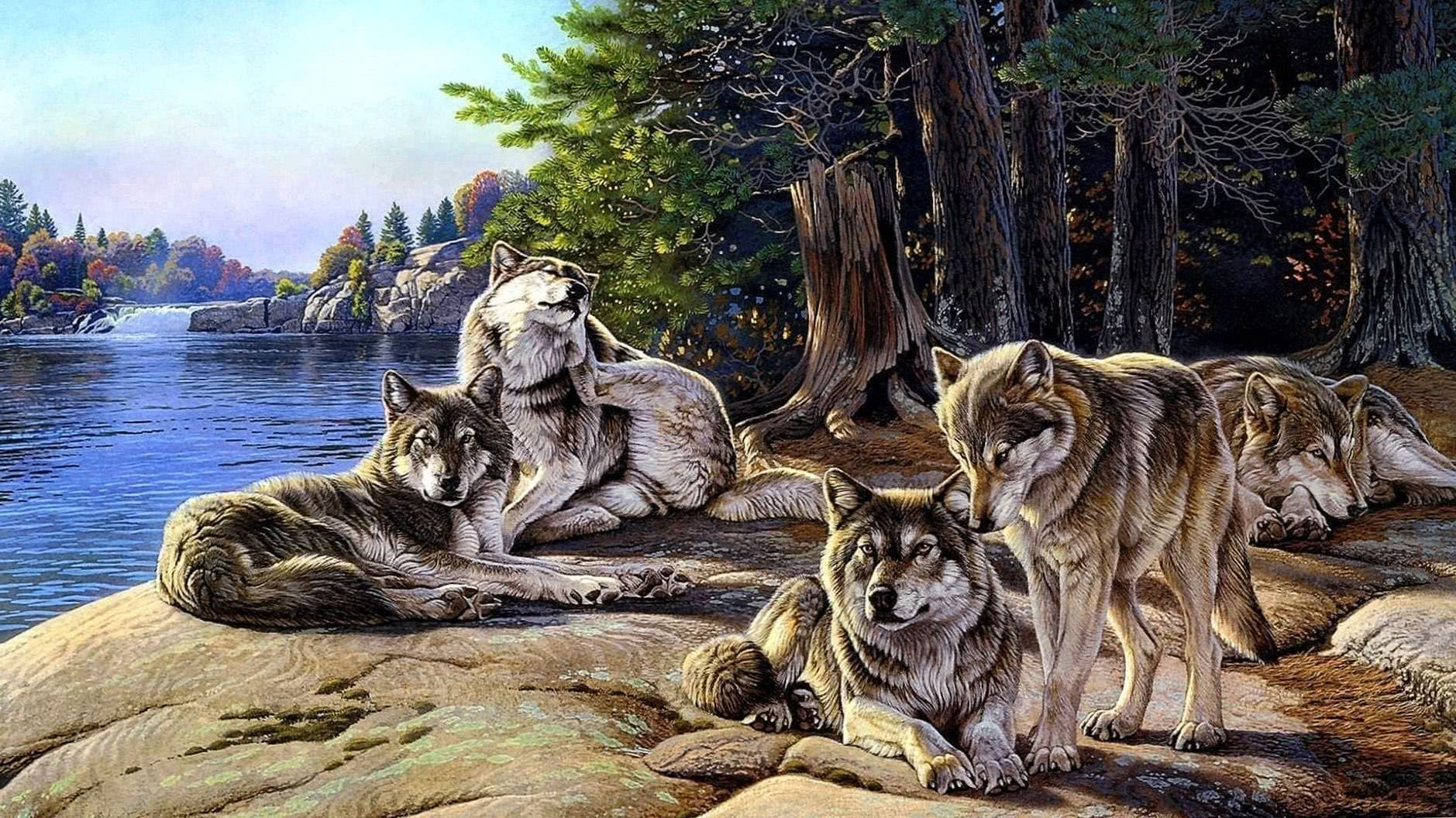 Free Awesome Wolf Pack Wallpapers Wolf Wallpapers Pro