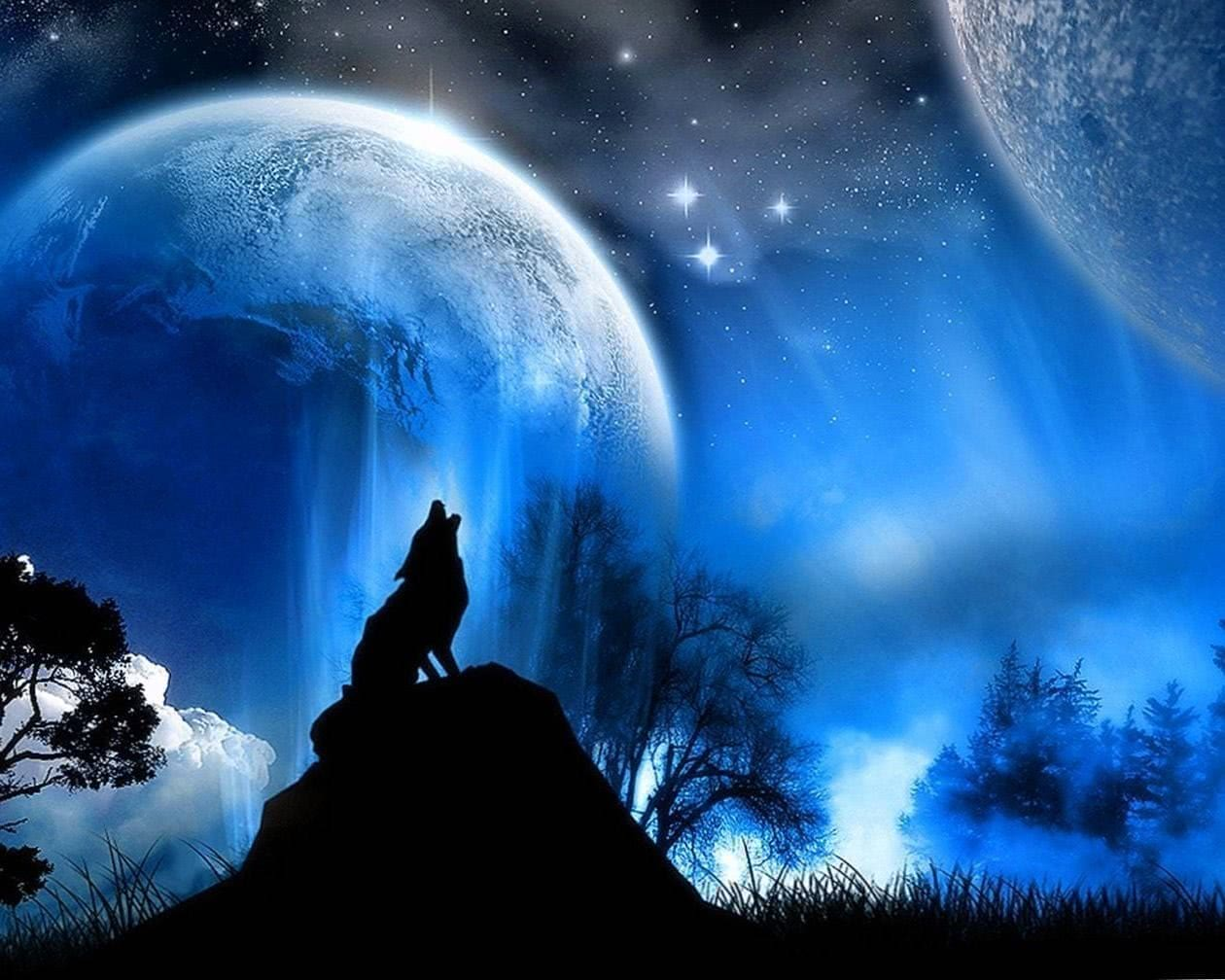 Free Wolf Wallpapers For Laptop Wolf Wallpapers Pro