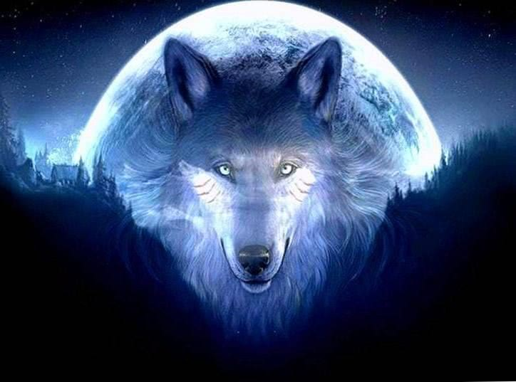 White Wolf 3D Wallpaper HD