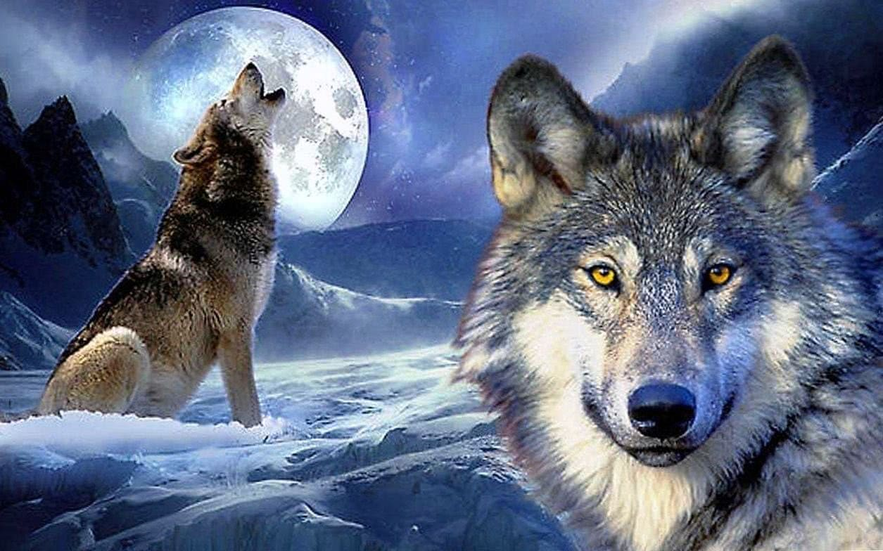 3D Live Wallpaper Wolves