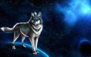 Wolf Wallpapers 3D App