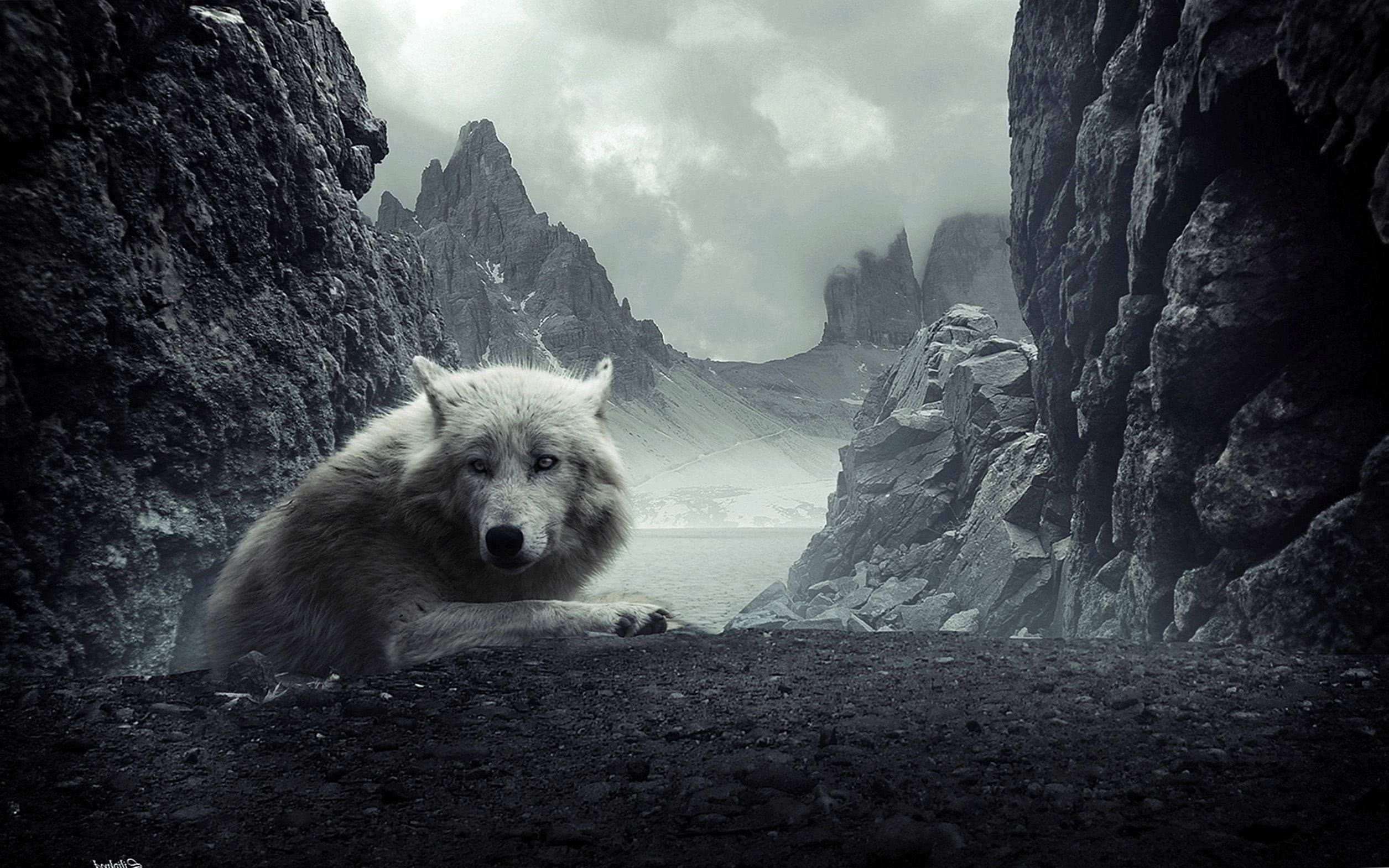 HD Wallpaper Of White Wolf