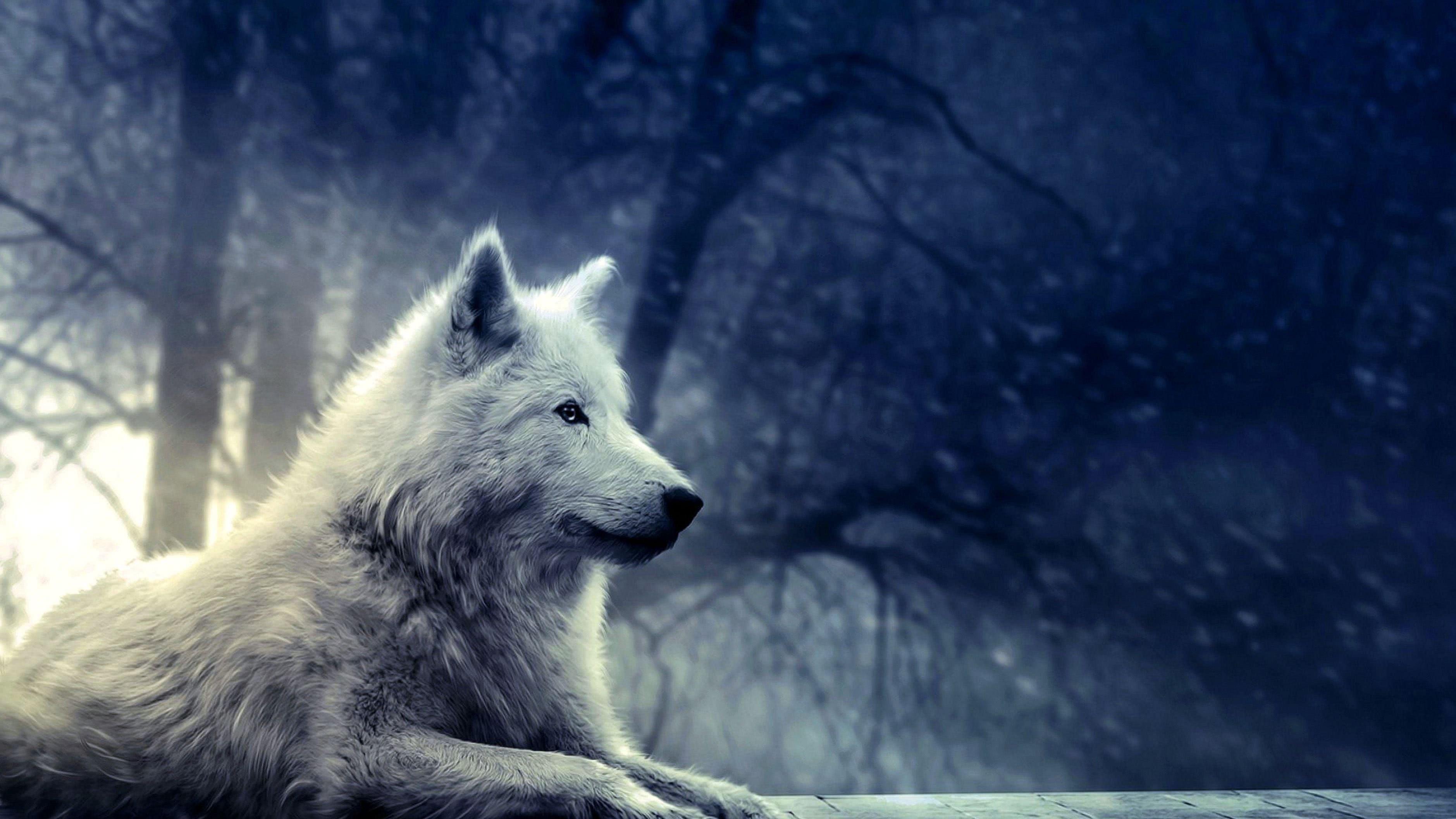 Wolf Moon Wallpaper 4K