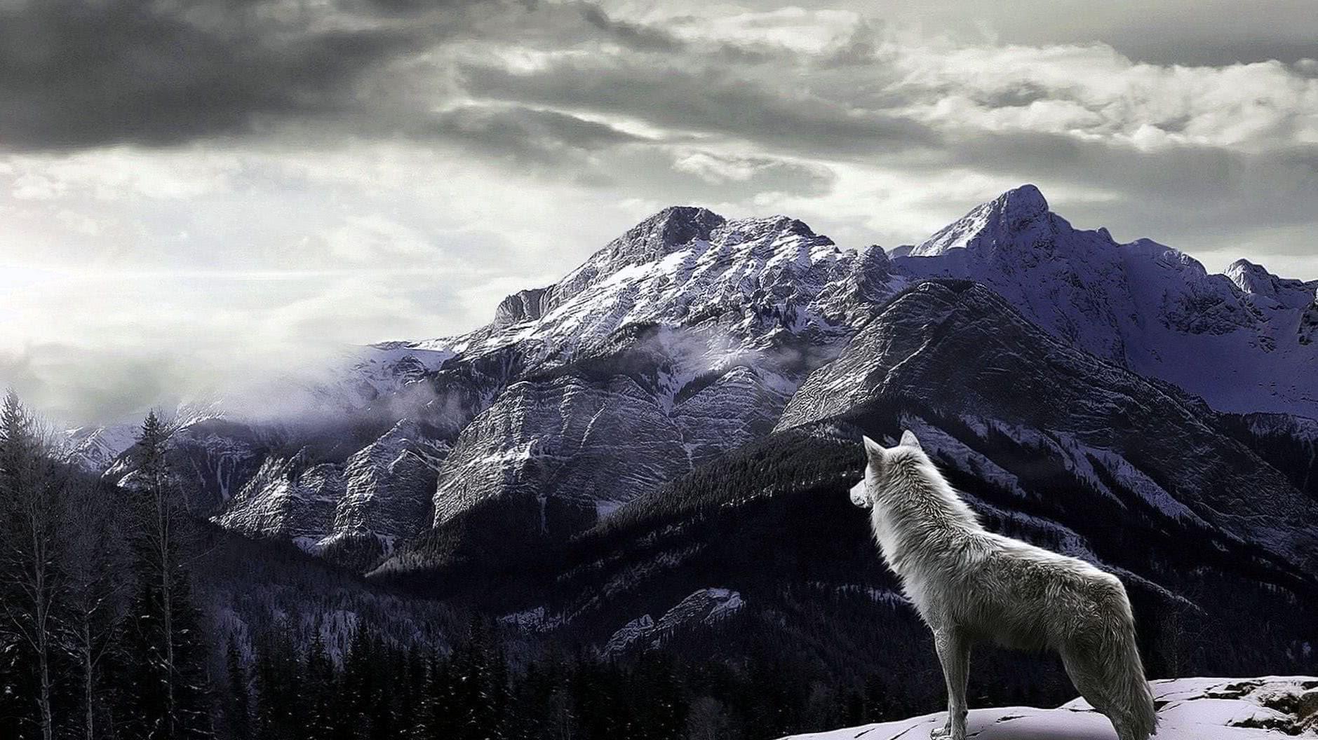 Wallpaper Full HD 4K Wolf