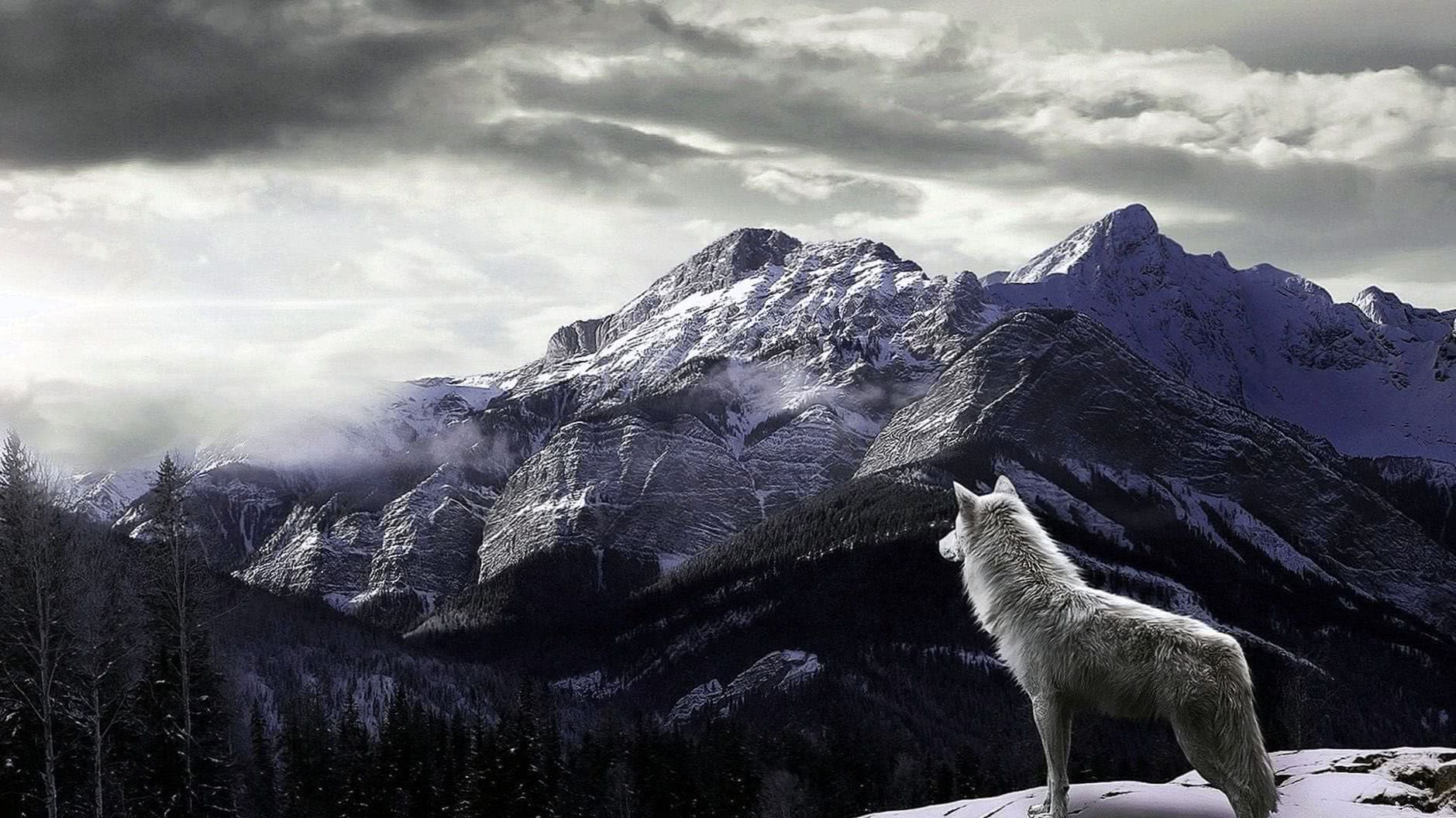 Full HD 4K Wolf Wallpapers