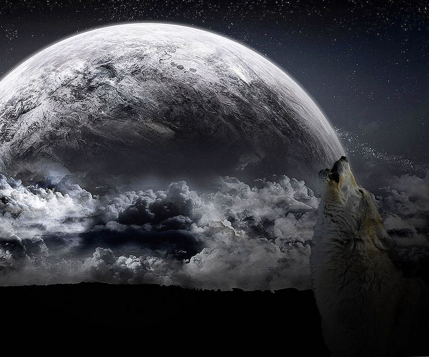 Howling Wolf 4K Wallpapers