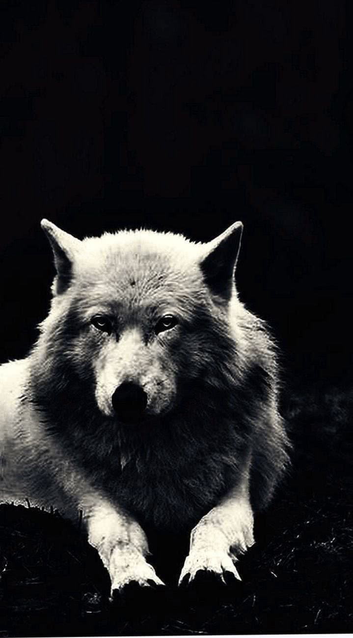 Wallpaper HD Wolf