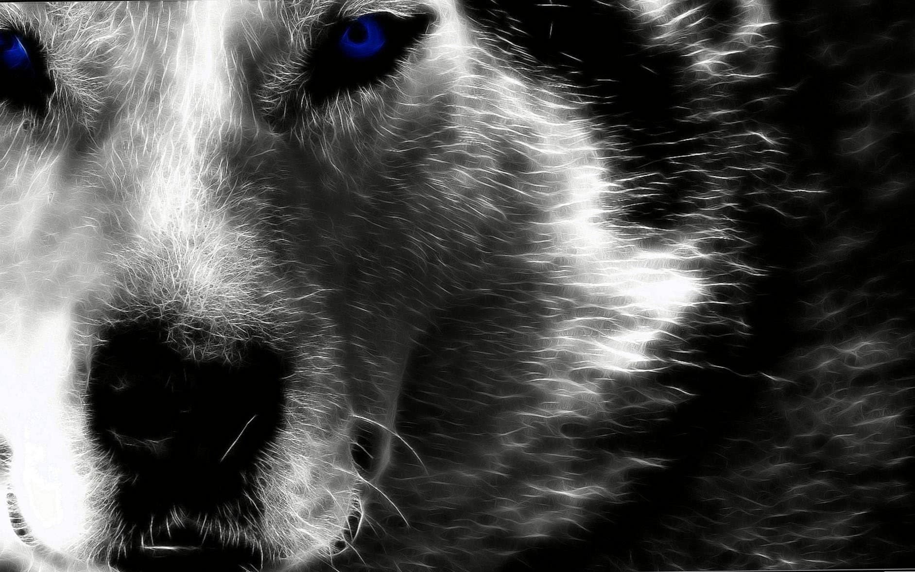 Alpha Black Wolf HD Wallpapers