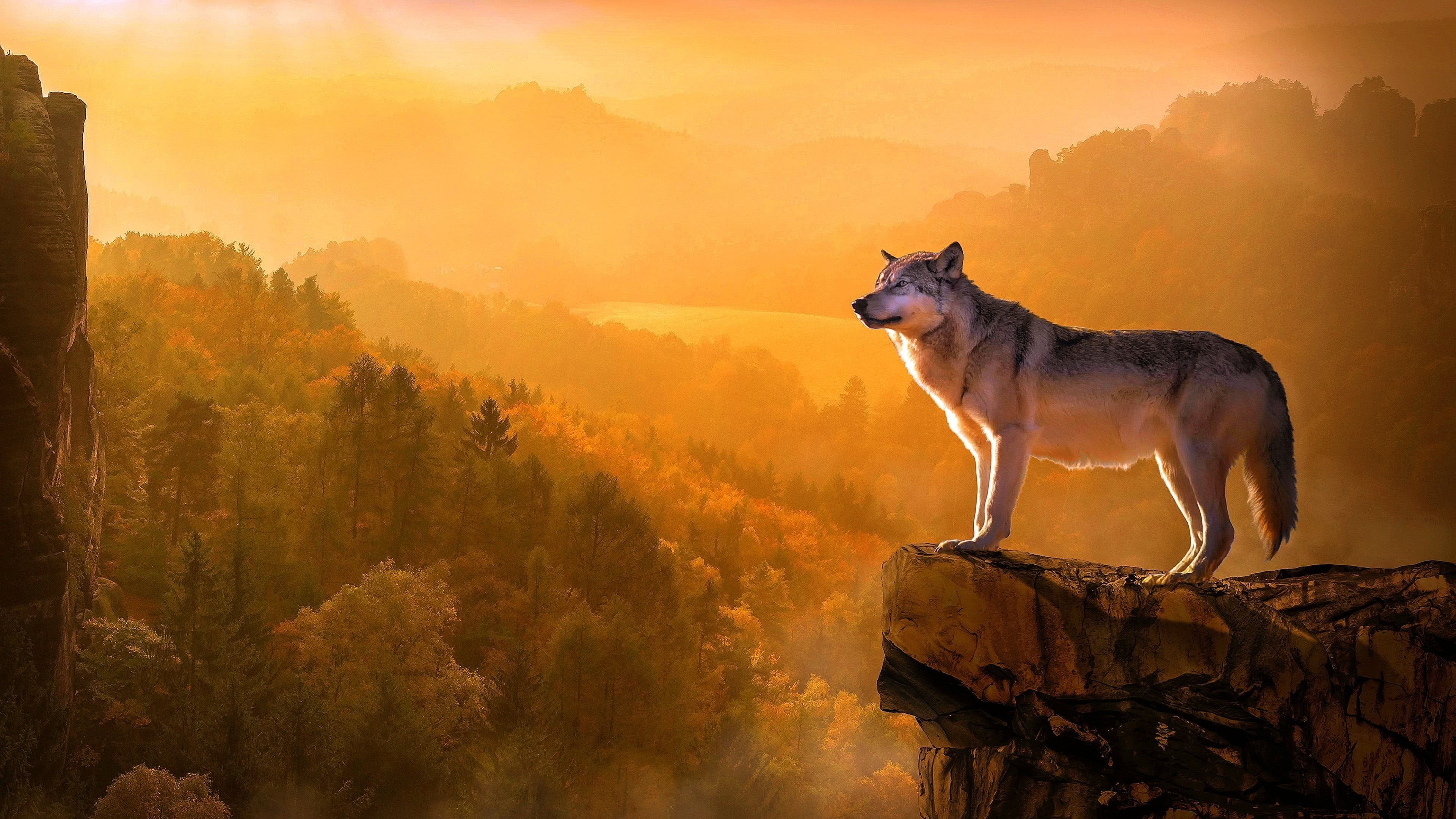 Amazing Wolf Wallpapers 4K