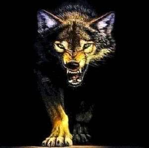 Wallpapers Wolf Growl