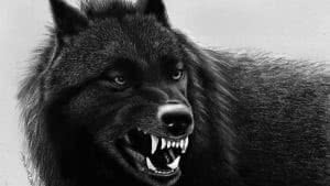 Angry Black Wolf Wallpapers 4K