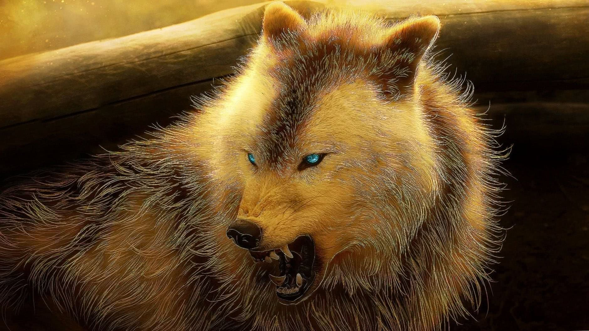Angry Wolf Wallpapers HD 1080p
