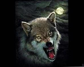Wallpapers Wolf Angry