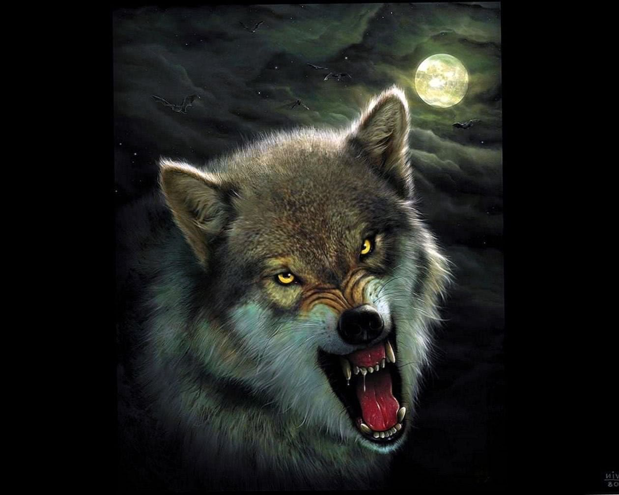 Wolf Angry Wallpapers Wolf Wallpaperspro
