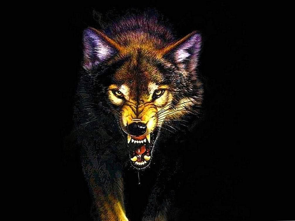 Angry Wolf Wallpapers Cave - Wolf