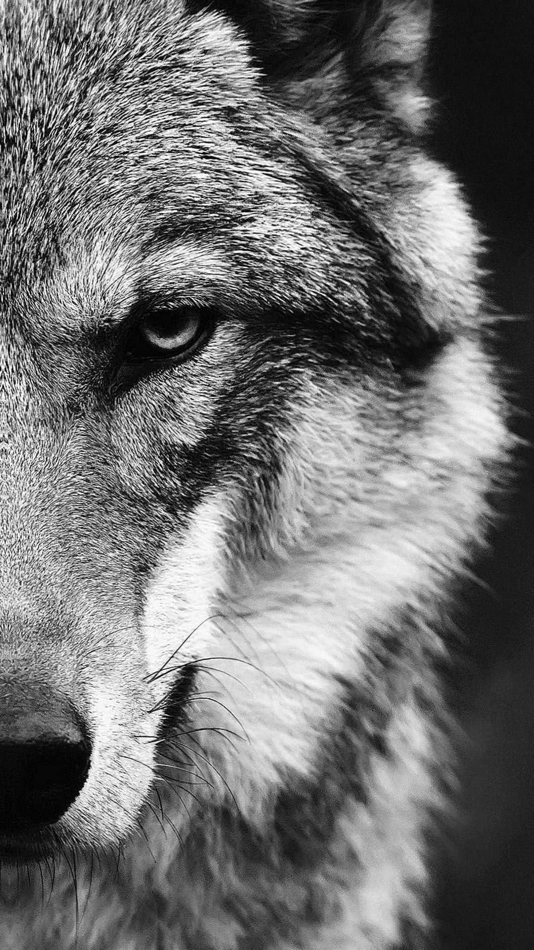 White Wolf Wallpaper Celular