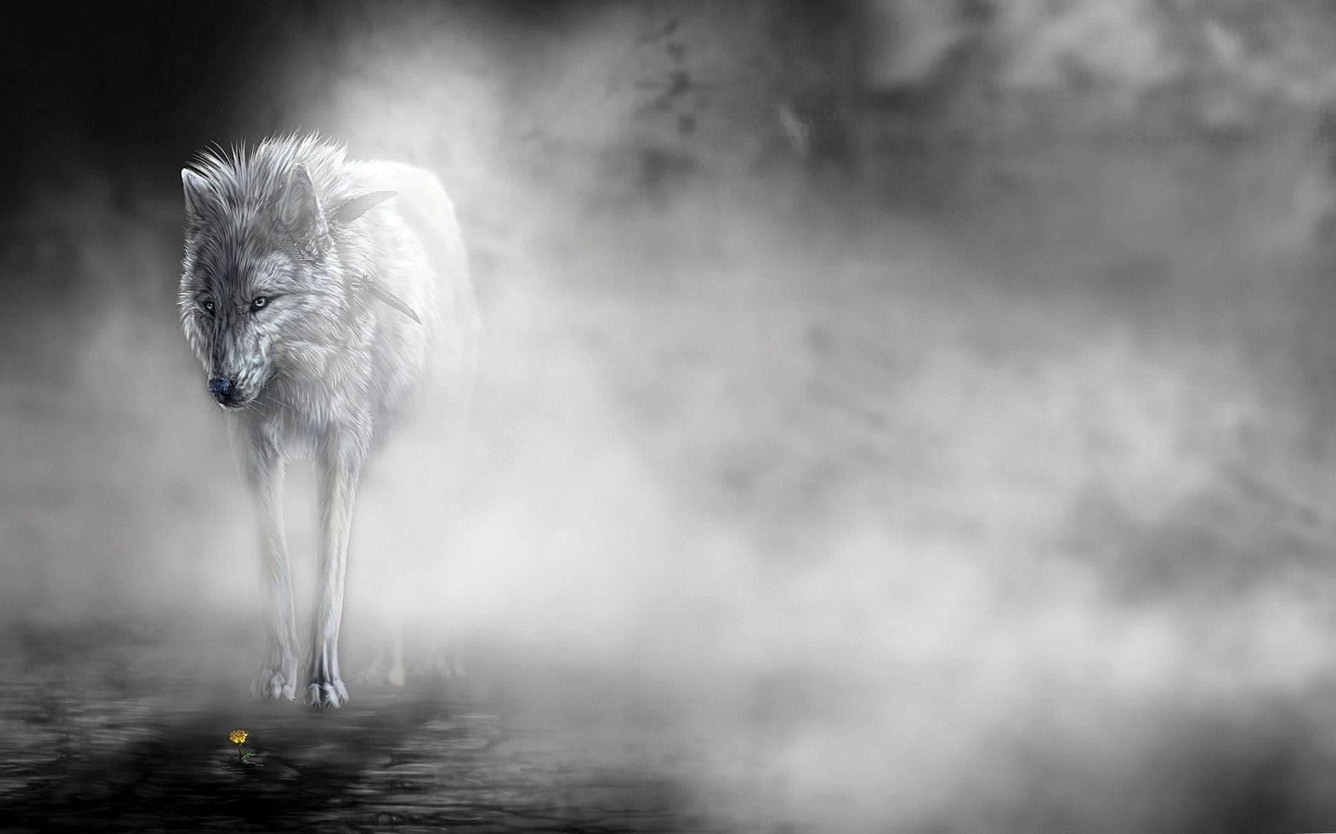Fog Wolf Wallpaper