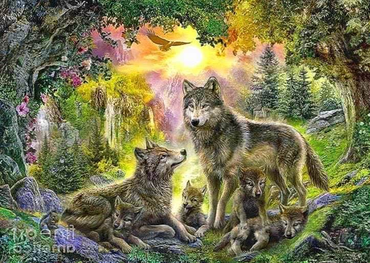Wolf Wallpapers Family