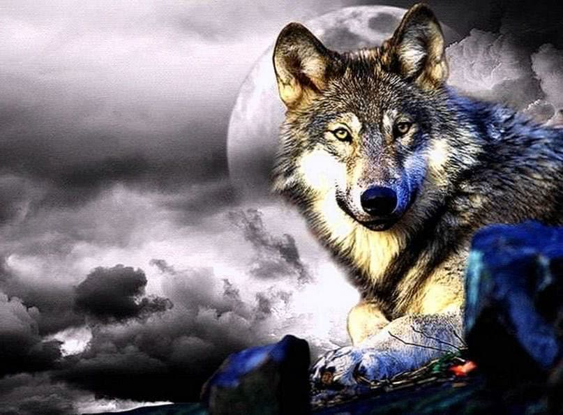 Awesome Beautiful Wolf Wallpapers