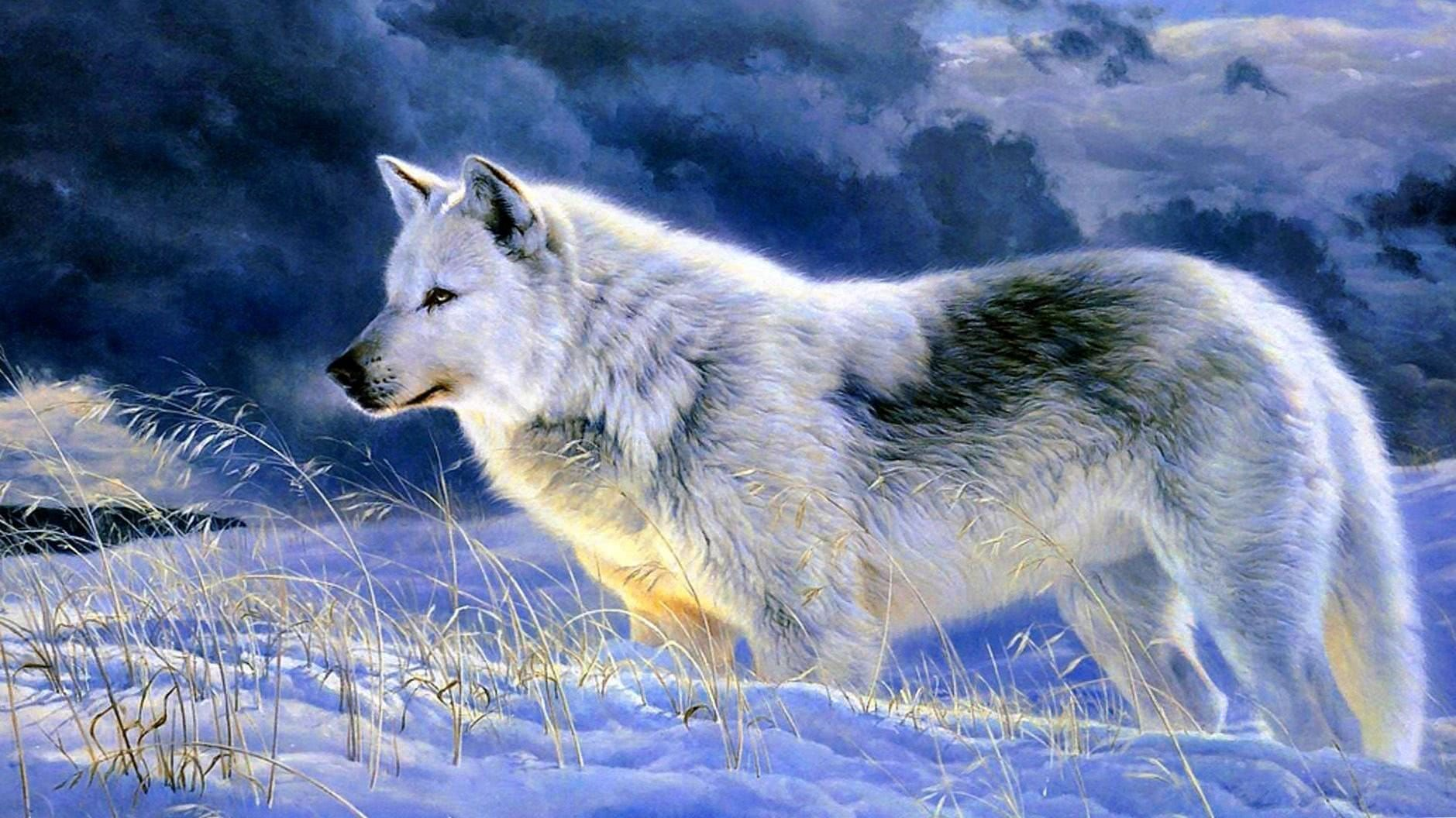 Wallpapers Of Gray Wolves