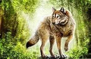 Timber Wolf Desktop Wallpapers