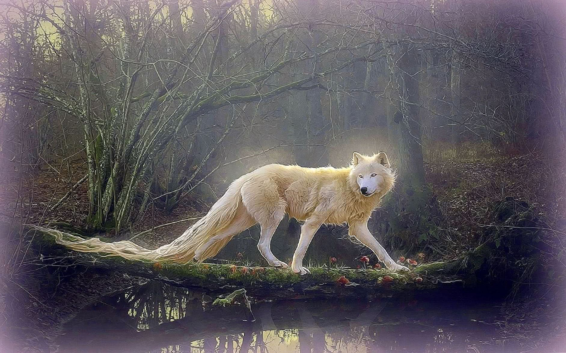 Beautiful Wallpapers Of Wolves Wolf Wallpapers Pro