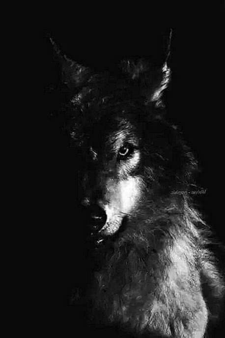 Wolf Wallpaper UK