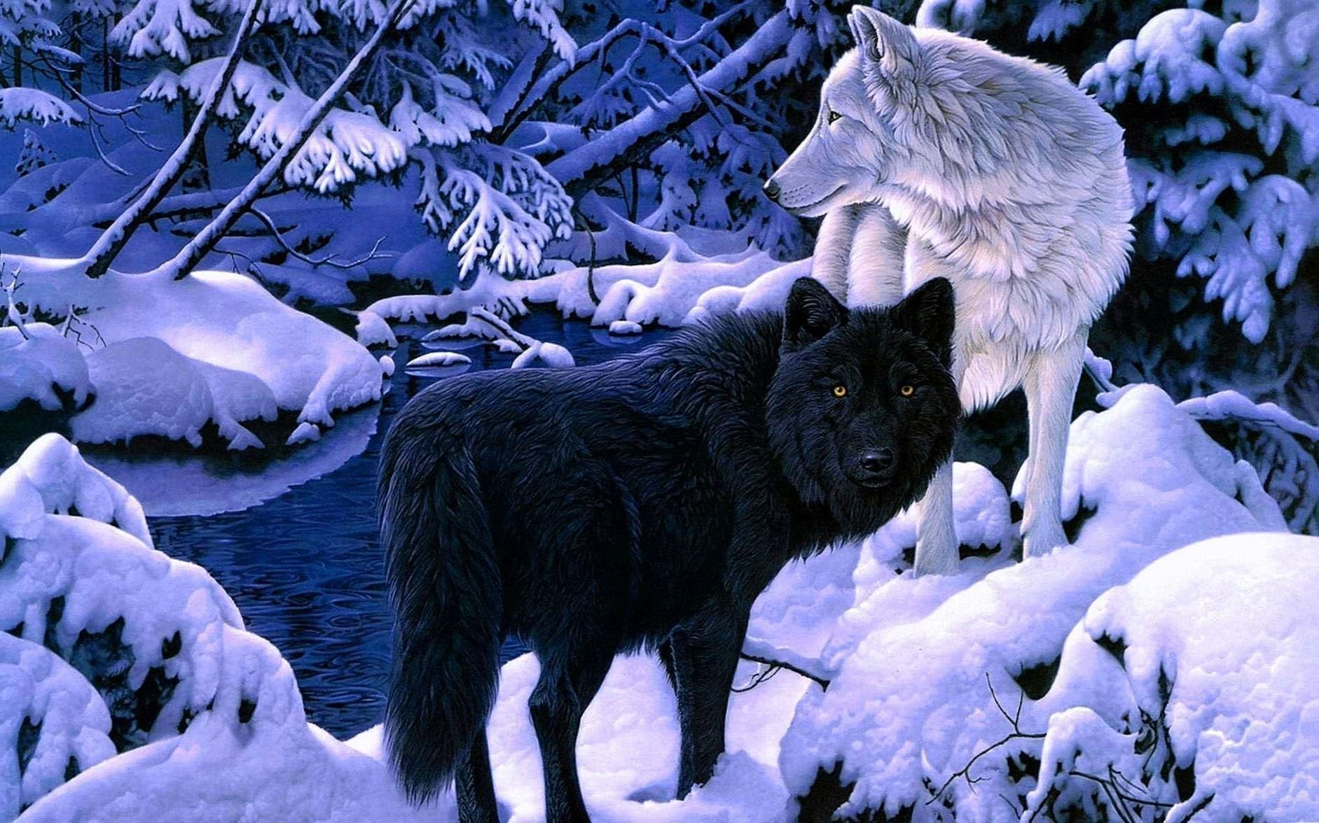Wolf Black And White Wallpapers HD