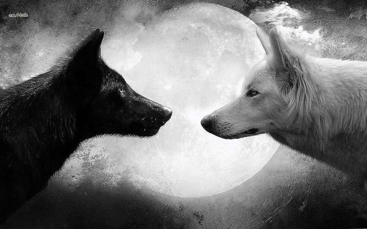 Wolf And Black Wallpapers