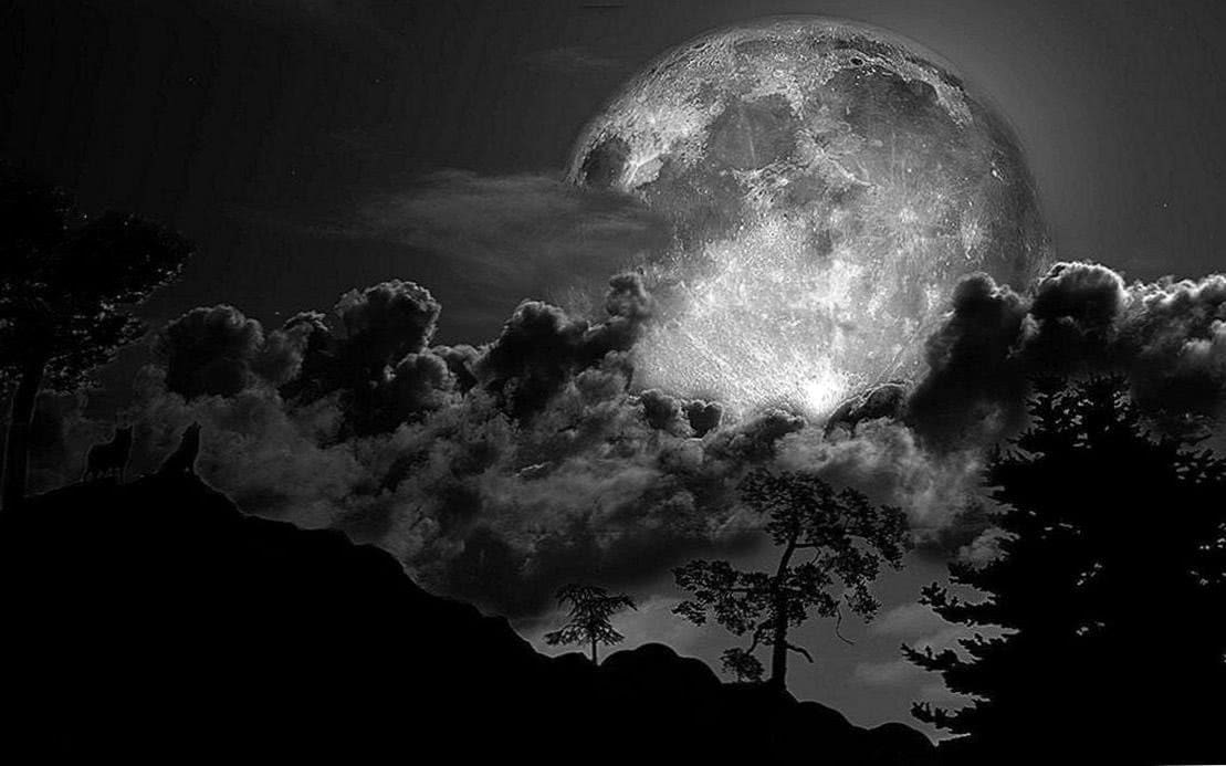 Black And White Wolf Howling At The Moon Wallpapers