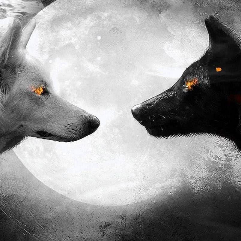Black And White Wolves Wallpaper