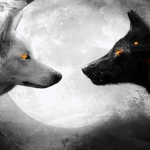 Free Black Wolf And White Wolf Wallpapers Wolf Wallpapers Pro