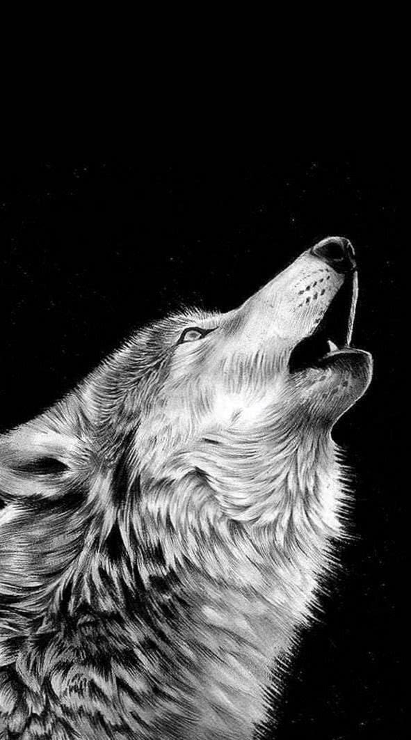 iOS Wolf Wallpaper