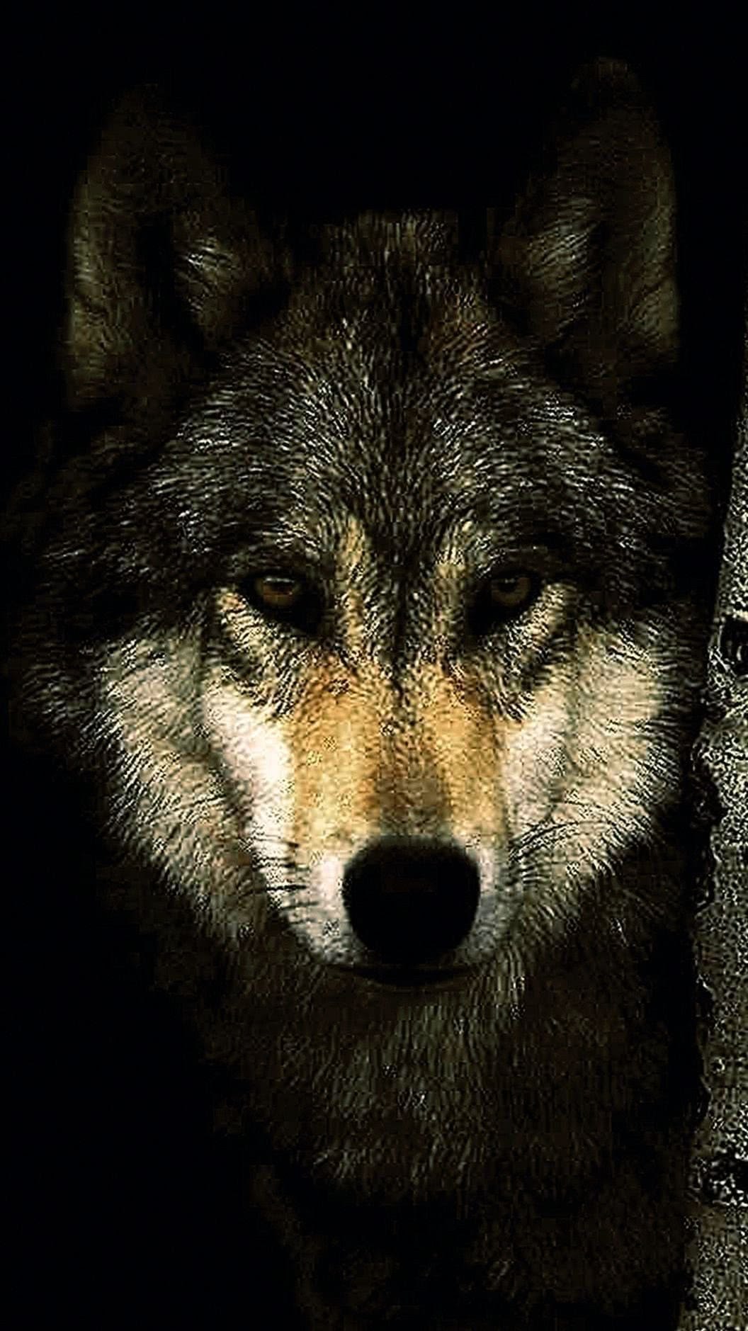 Wallpaper Dark Wolf HD