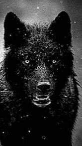 Wallpapers Black Wolf 1080x1920