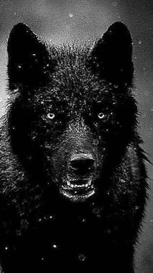 Black Wolf HD iPhone Wallpaper