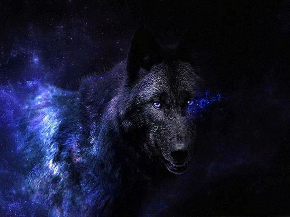 Black Wolf Eyes Wallpaper