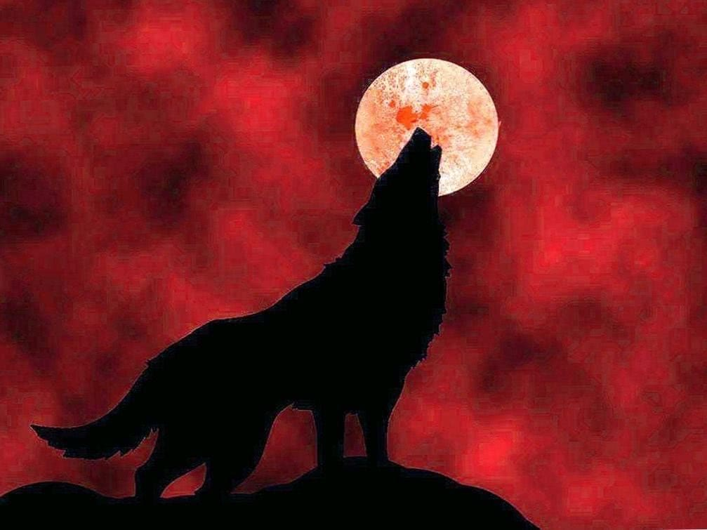Blood Moon Wolf Wallpapers