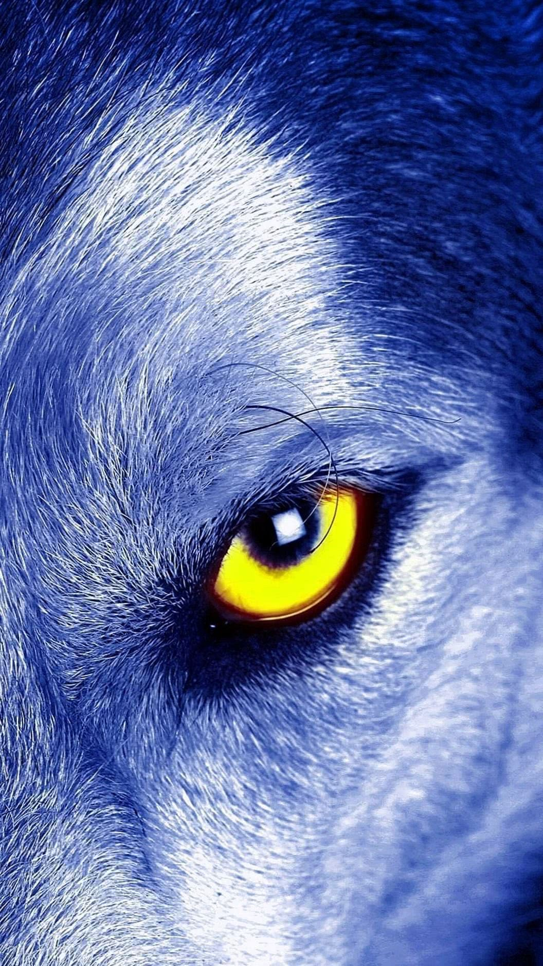 Wolf Eyes iPhone Wallpaper