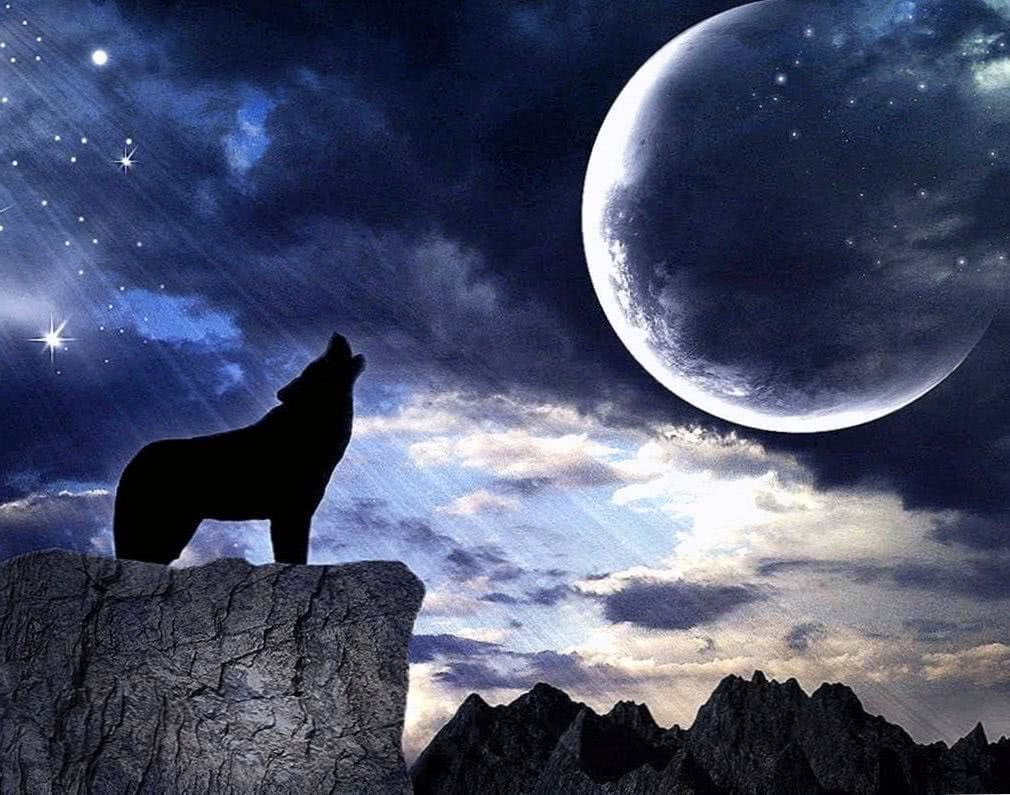 Wolf Howling Moon Wallpapers Wolf Wallpapers Pro