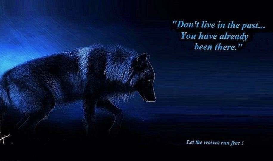 Wolf Quotes Wallpaper