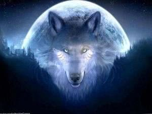 Cool HD Wolf Wallpapers
