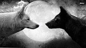 Good Wolf Wallpapers