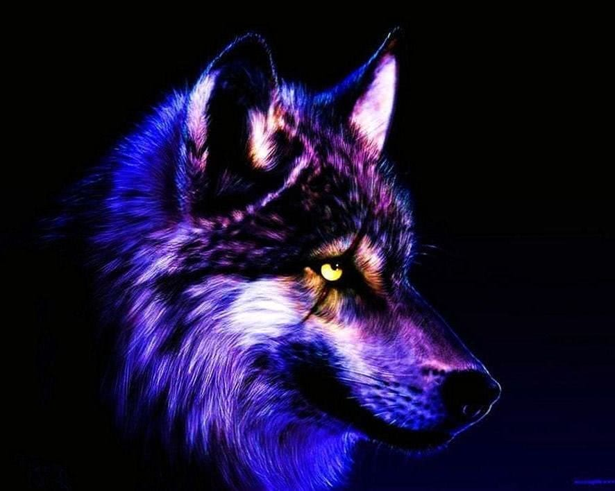 Free Cool Wallpapers Wolves Wolf Wallpapers Pro
