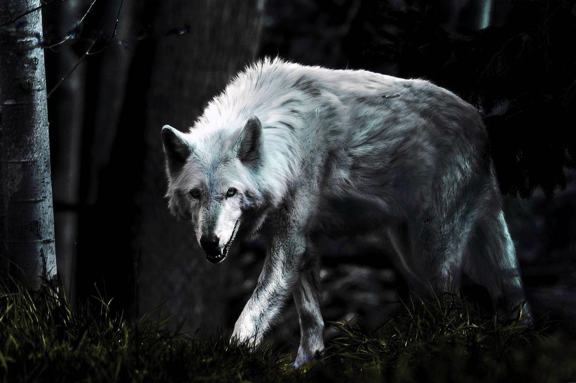 Wallpapers Dark Wolves